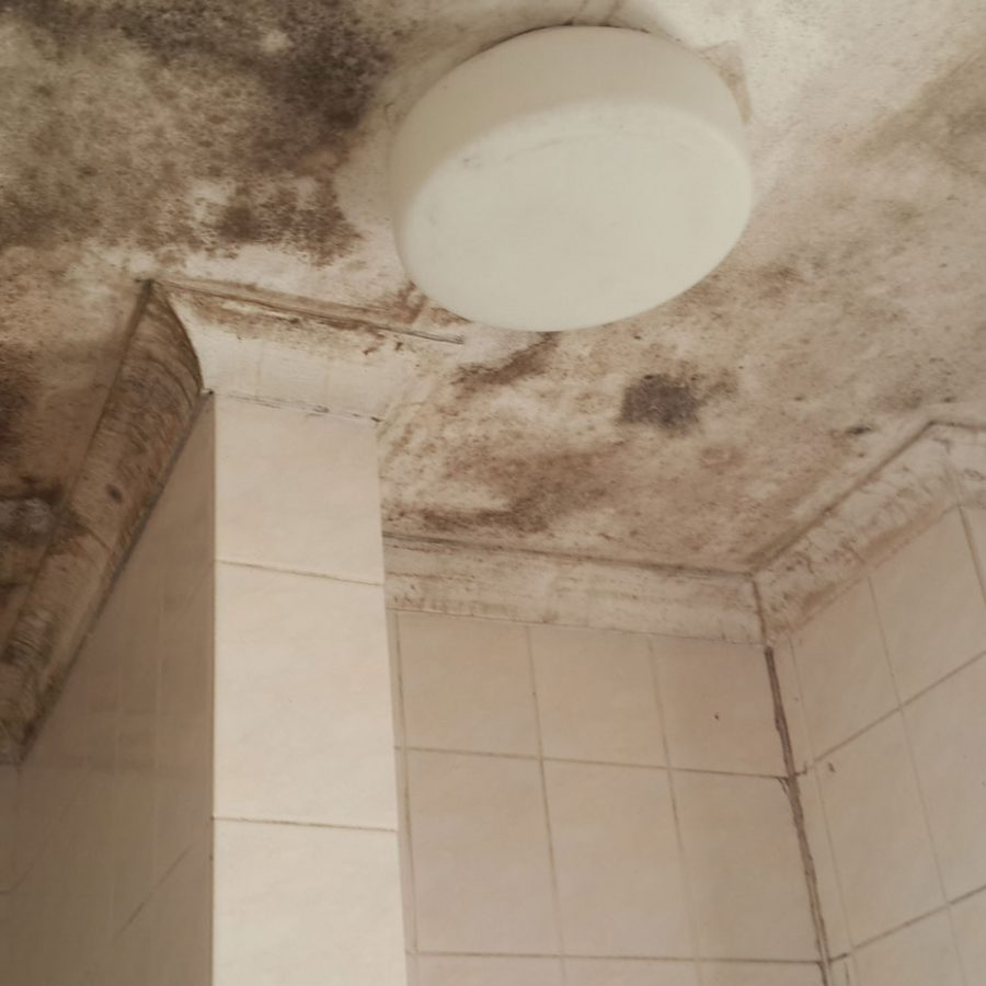 Bathroom Mould (Mold, Mildew) Removal « Roodepoort Info