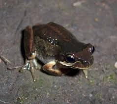 Frogging – nocturnal event @ Kloofendal Nature Reserve